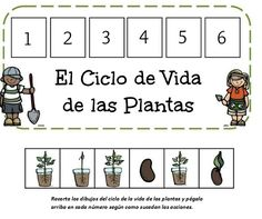 ciclo la vida de las plantas Preschool Learning Activities, Hands On Activities, Teaching Kids, Spanish Teaching Resources, Spanish Lessons, Plant Science, Science And Nature, Pre K Worksheets, Reading Groups