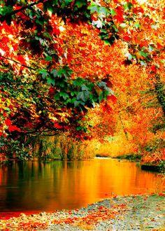 Fall Spectacular!