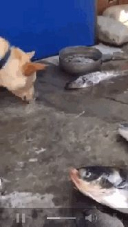 Dog with a Conscience. Doggy sees fish struggling and tries to splash water on…