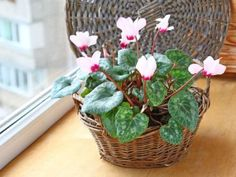 jak-spravne-pestovat-brambori Indoor Plants, Flower Arrangements, Flora, Table Decorations, Gardening, February, Floral Arrangements, Garten, Plants