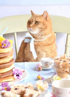 あぺりらの首輪と茶トラ会のお菓子その1|かわいいと猫がいっぱい♪ Lauraのスイーツ&ハンドメイド