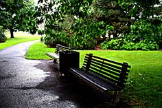 Benches by Dows Lake after the rain