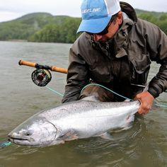 Fresh Chinook - pure skeena chrome! @skeenaspeyfishing #aosfishing #flyfishing #fliegenfischen #pescamosca #graz #styria #steiermark #onlineshop #picoftheday #looplife #guidelineflyfish #photooftheday #lovefishing #austria #catchoftheday #fluefiske #speycasting #skeenariver #skeena #canada #kanada #onthefly #feelthepull #chinook #chinooksalmon