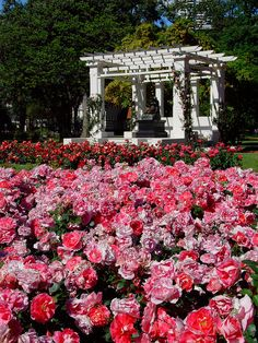 GARDENS: Buenos Aires in never lovelier than in springtime. I think this photo is taken in Rosedal (see http://www.buenosaires.gov.ar/areas/med_ambiente/parque_3_de_febrero/rosedal/) which is a lovely place to visit.