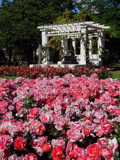 Rosedal gran jardín del Parque 3 de Febrero de la ciudad de Buenos Aires www.buenosaires.gov.ar/areas/med