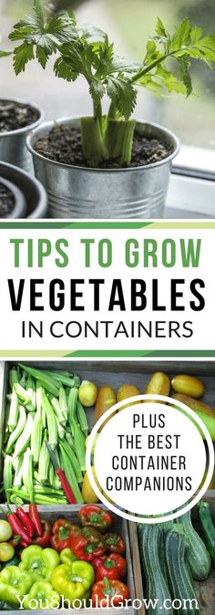 Grow your own food in containers! Tips to grow vegetables in containers plus the best container companions. via @whippoorwillgar