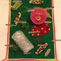 Plant cell model Science Projects, Science Experiments, School Projects, Plant Cell Project, Plant Cell Model, Science Models, Kid Stuff, Crafts For Kids, Education