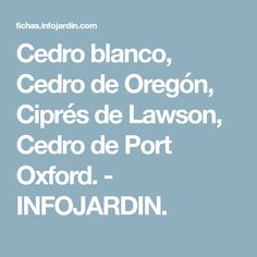Cedro blanco, Cedro de Oregón, Ciprés de Lawson, Cedro de Port Oxford. - INFOJARDIN.