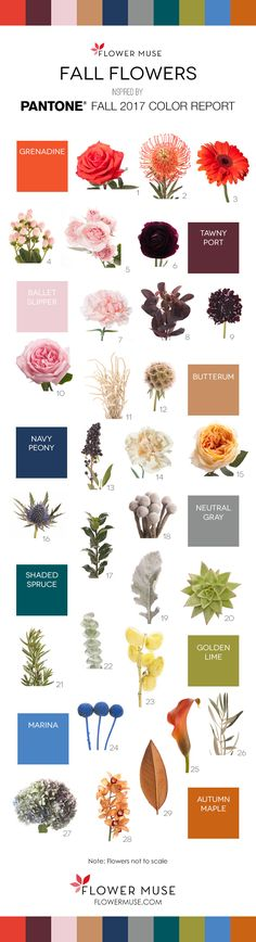 We share our picks of 2017 fall flowers as inspired by Pantone's Fall Color Report. Get ideas for your wedding or event with some fall flowers inspiration! Fall Wedding Flowers, Fall Flowers, Love Flowers, My Flower, Colorful Flowers, Flower Colors, Pantone Fall 2017, Pantone 2017 Colour, Ikebana
