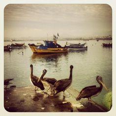 Caleta de pescadores de Coquimbo, IV Region, Chile