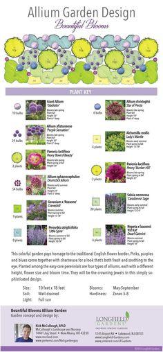 Allium Garden Design: Bountiful Blooms #perennialgardenplanning #gardeningplanslayout