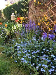 My favourite bit of the garden in Spring.