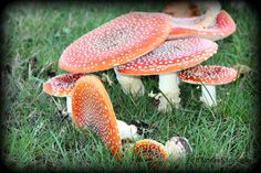 Mushrooms Photo taken by Chance Photography Canada