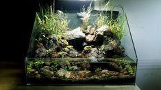 How make aquaterrarium waterfall natural with some fern, moss, grass Saltwater Aquarium, Planted Aquarium, Freshwater Aquarium, Aquascaping, Nano Reef Tank, Paludarium, Reptile Enclosure, Moss Grass, Fish Tank