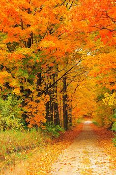 ✯ Autumn. The trees are dressed in their finest glowing colours