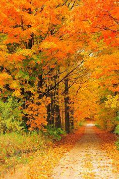 ✯ Autumn Marmalade