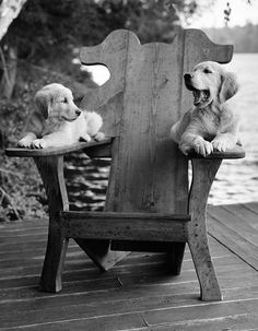 Bruce Weber Collaborates with Shinola on a Collection for Pets Labradores - El amor obsesivo de Bruce