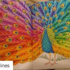 Millie Marotta coloridos (@milliemarottabooks) | Instagram photos and videos