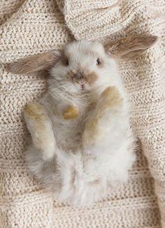 Little bunny chillin'