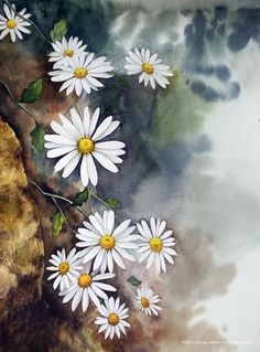Watercolor Images, Watercolor Artwork, Watercolor Artists, Watercolor And Ink, Watercolor Illustration, Watercolor Flowers, Daisy Art, Acrylic Painting Flowers, Wild Flower Meadow