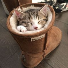 These Cats Sleeping in Awkward Positions Will Make You Giggle ...