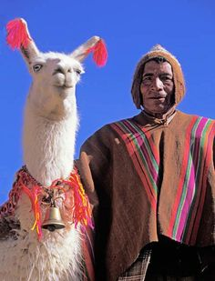 Bolivia's Disappearing Salt-Trading Llama Trains  Man and LlamaPhoto: Victor Englebert