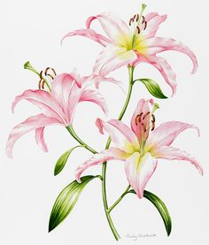 Pink Lily Painting by Sally Crosthwaite