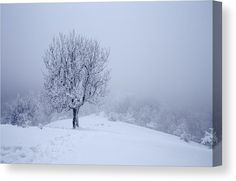 Alone Canvas Print by Ren Kuljovska.  All canvas prints are professionally printed, assembled, and shipped within 3 - 4 business days and delivered ready-to-hang on your wall. Choose from multiple print sizes, border colors, and canvas materials. #canvasprint #snowytree #wintertree #winteratmosphere Beautiful Winter Scenes, Nature Artists, Nature Artwork, Stretched Canvas Prints, Great Artists, Art For Sale, Painted Rocks, Fine Art America