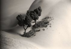 Giants by alexis mire, via Flickr