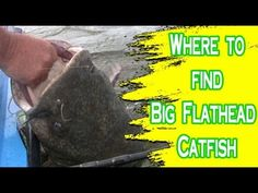 Bank fishing for catfish | HOW TO CATCH CATFISH
