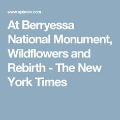 At Berryessa National Monument, Wildflowers and Rebirth - The New York Times