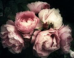 Beautiful Bouquet Of Pink Roses, Flowers On A Dark Background, Soft And Romantic Vintage Filter, Looking Like An Old Painting Wall Mural Wallpaper Wall, Temporary Wallpaper, Rose Wallpaper, Photo Wallpaper, Mural Floral, Floral Wall, Photo Rose, Blush Walls, Pink Rose Flower