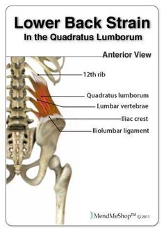 Low Energy Remedies Pulled Lower Back Muscle. Deep heat therapy is a primary treatment for back muscle strains. Deep penetrating energy helps enhance extensibility of muscle and supporting tissue - while also helping in production of new collagen. Lower Back Strain, Lower Back Muscles, Lower Back Pain Relief, Low Back Pain, Hip Pain, Muscle Diet, Back Injury, Muscle Strain, Psoas Muscle
