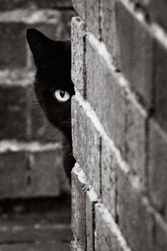 #cats #photography #black and white