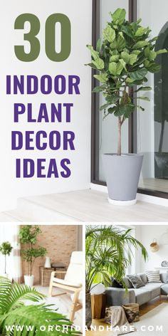 30 Indoor Plant Decorating Ideas - Houseplant decor ideas perfect for apartments, living rooms, bedrooms, kitchen and more! Get that gorgeous Farmhouse style with these pots and display ideas for your indoor plants. Theres even some DIY project ideas too! Handmade Home, Pothos Plant, Low Light Plants, Bathroom Plants, Outside Living, Different Plants, Diy Planters, Plant Shelves, Decorating Ideas