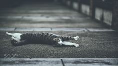 stretch. (Koichi YOSHII / Yokohama / Japan) #Canon EOS 5D Mark III #animals #photo #nature