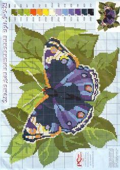 Gallery.ru / Фото #63 - бабочки - irisha-ira