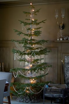 The brown room had two amazing silver tip fir trees. These fragrant specimens were grown in Oregon at elevations of 8000 feet.