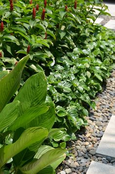 Lush layered foliage planting and clean lines