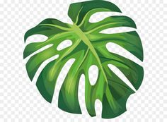 Related image Beach Illustration, Plant Illustration, Monstera Deliciosa, Banana Leaves Image, Leaf Clipart, Clipart Images, Palm Tree Background, Palm Tree Vector, Leaf Stencil