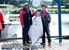 Another huge halibut! guided fishing at its best. Halibut, Fishing, Seasons, Coat, Jackets, Down Jackets, Sewing Coat, Seasons Of The Year, Peacoats