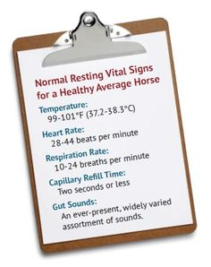 Normal Resting Vital Signs for a Healthy average horse