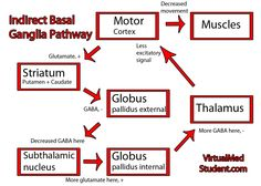 The indirect basal ganglia pathway for dummies!