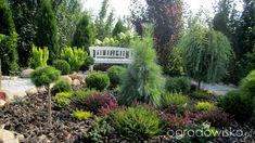 Igiełkowy ogródeczek - strona 9 - Forum ogrodnicze - Ogrodowisko