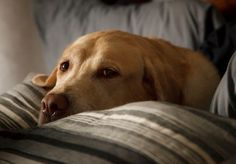 Sugarless Gum Can Make Dogs Very Sick, Report Says - Fortune