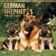 BrownTrout Hunde Kalender 2018Browntrout Hunde Wandkalender 2018: German Shepherd - Deutscher Schäferhund