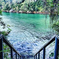 Found the prettiest of secret swimming spots this weekend. Come back summer!!! #hiking #weekend #ozoutdoors #outdoorlife #outsideculture #travelfreedom #adventure #sydney #australia #xploresydney #ilovesydney #girlswhohike #visitnsw #nature #wanderaustralia #summer #pioneerwalks #hiker_mentality #hiking_official #exploringaustralia #canon #photography