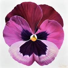 50 Ideas Art Journal Flowers Paint For 2019 Rare Flowers, Beautiful Flowers, Watercolor Flowers, Watercolor Art, Kids Canvas Art, Kindergarten Art Projects, Climbing Roses, Types Of Flowers, Flower Photos