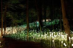 Bruce Munro is a British Installation artist, and most probably my favourite installation artist. His installations leave you speechless; his use of light to delicately transform a landscape is jus...