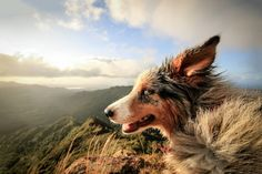 Mountain Dog Tuk Tuk